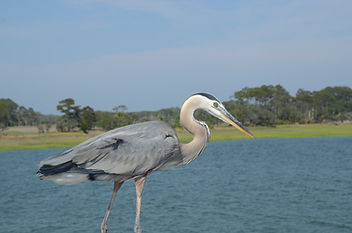 1marsh birds--stephens, andy, oscar at p