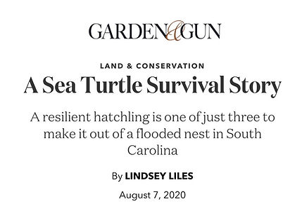 G&G SEA TURTLE STORY.jpg