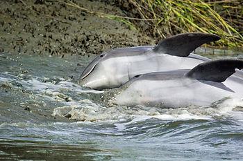 dolphinsstrandfeedingmandistark.jpg