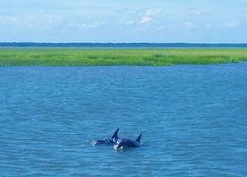 Dolphin Coastal Exp.jpg
