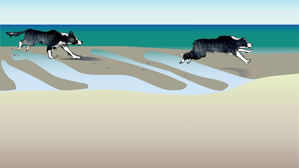Unframed print - Collie running at low tide