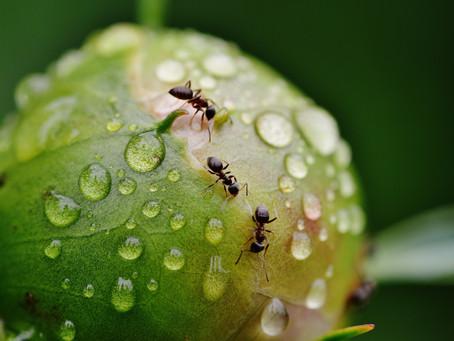 Hablando con las Hormigas
