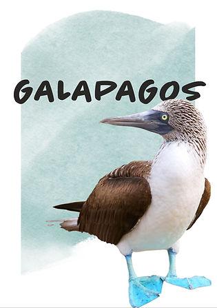 GALAPAGOS TURLARI