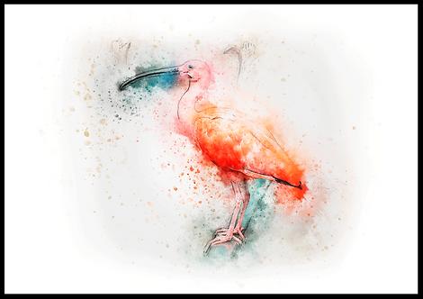 Smuk farverig plakat med ibis