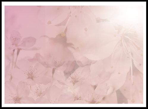 Kirsebær blomster 2