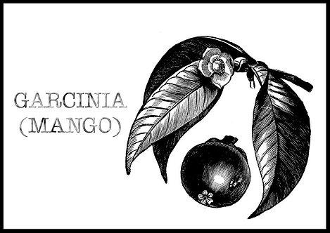 Garcinia-mango