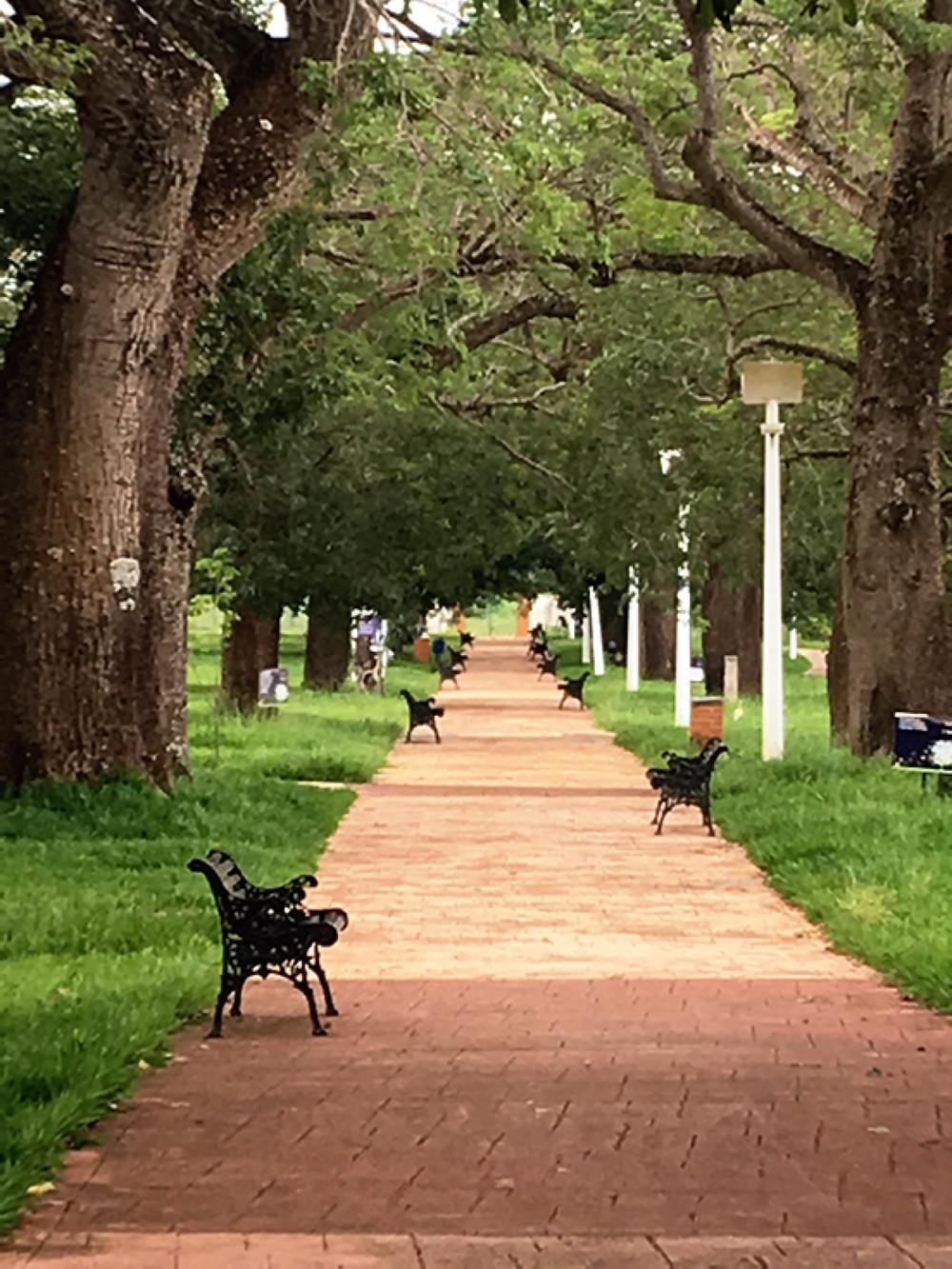 Parque das Barrigudas