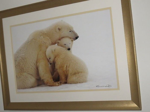 "Kennan Ward 24"" Polar Bear Photo, excellent"