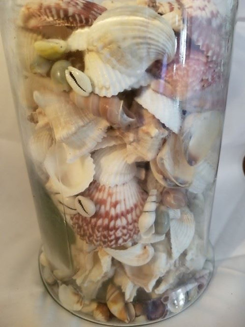 "18"" jar of shells"