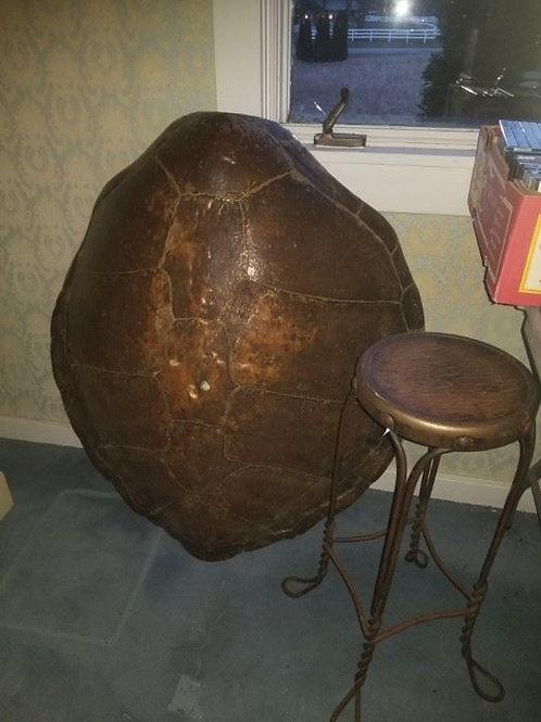 """40"""" ish tortoise shell"""