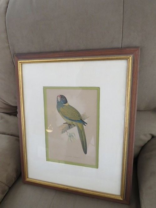 Green & blue Parrot print framed 15 x 20, vg condition