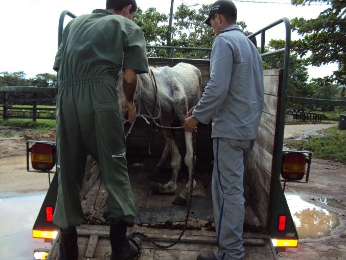 recepção de animais apreendidos