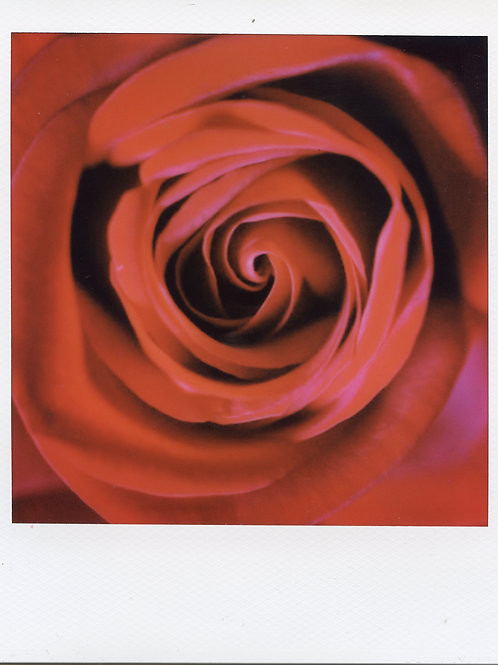 Rose - Original 1/1 Polaroid by Film Collage Artist