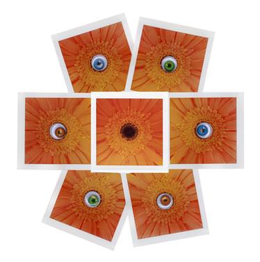 EyesCollage.jpg