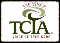 Safety First! Use a Tree Care Professional