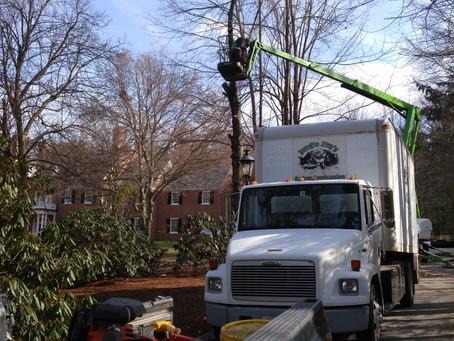 Tree Job Success!