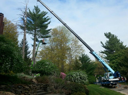 Tree Removal Bedford NH