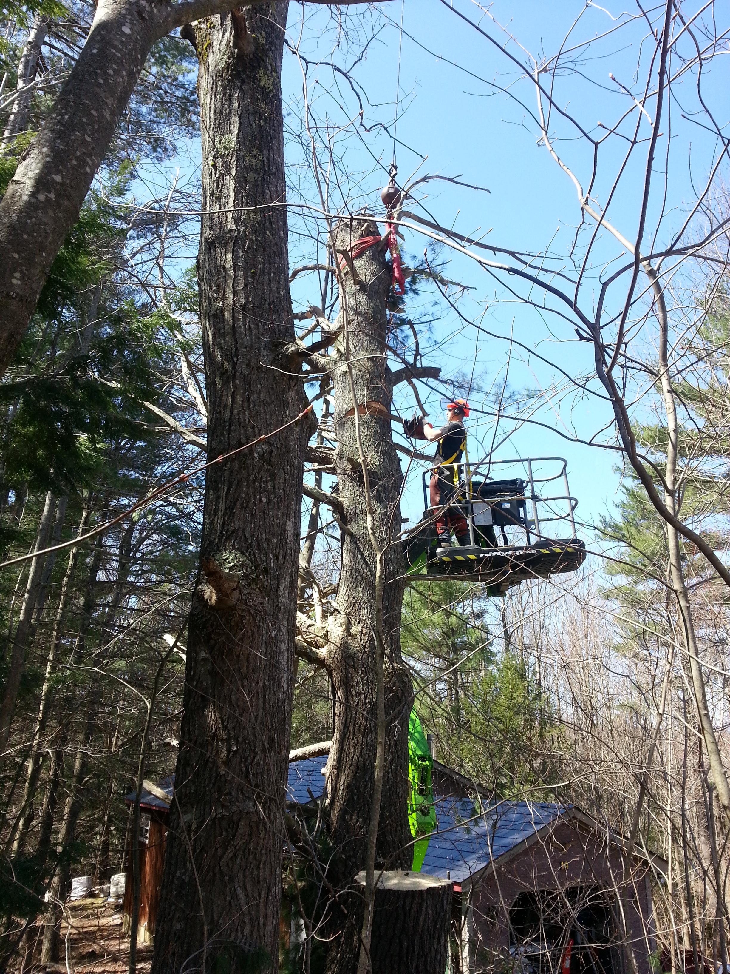 Tree Services NH.jpg