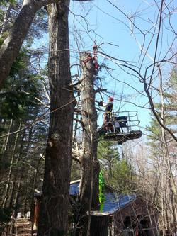Tree Services NH.jpg