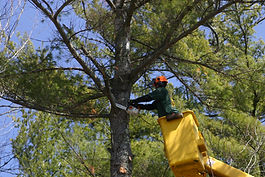 Tree removal, crane work, limbing, pruning