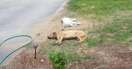 Dog days of summer, already?