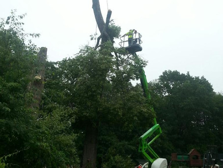 Large Oak Tree Removal in Concord, NH