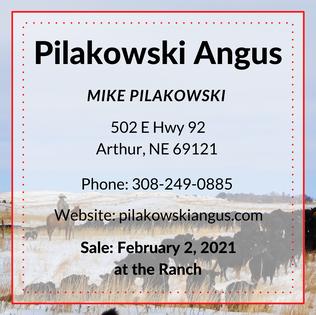Pilakowski Angus.png