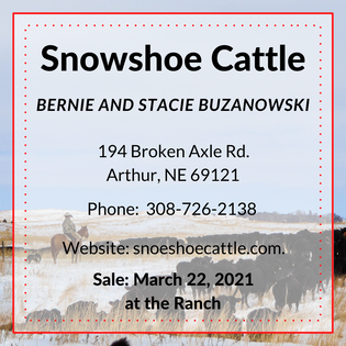 Snowshoe Cattle.png