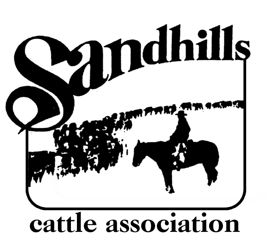 Sandhills Cattle