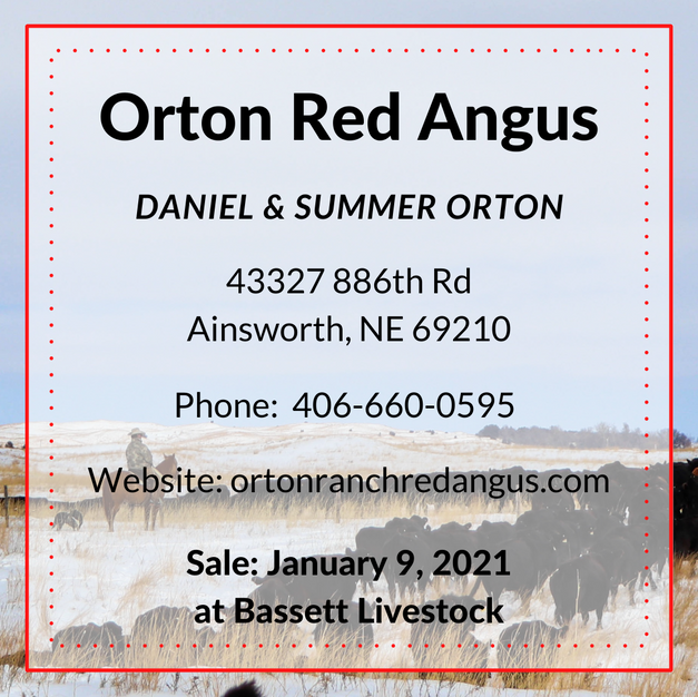 Orton Red Angus.png