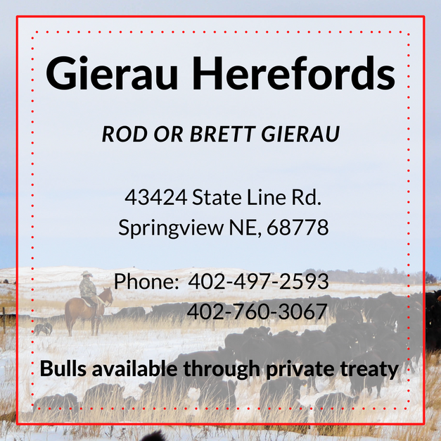 Gierau Herefords.png