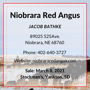 Niobrara Red Angus Angus.png