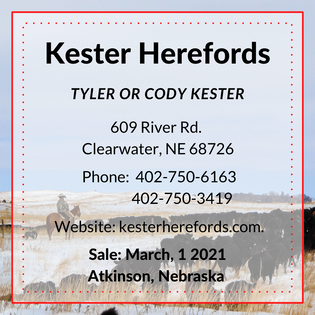 Kester Herefords.png