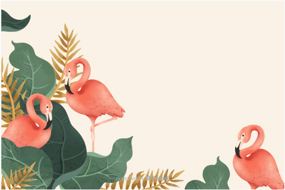 Flamingo Background 2.png
