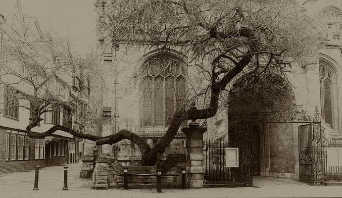 Branching out at Church by Susan Ashford SCORE:17
