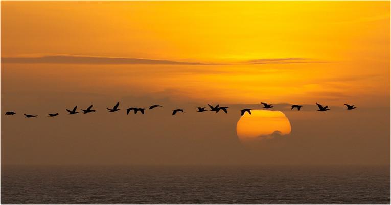 Dawn's Early Flight by Paul Branchflower SCORE:19