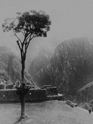 Tree with a view, Machu Picchu - Niels Powell