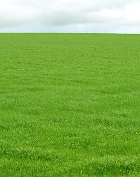 field-of-grass-1362858-1599x1066.jpg