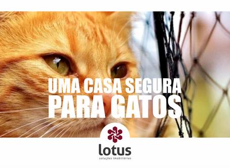 Uma casa segura para gatos 😺