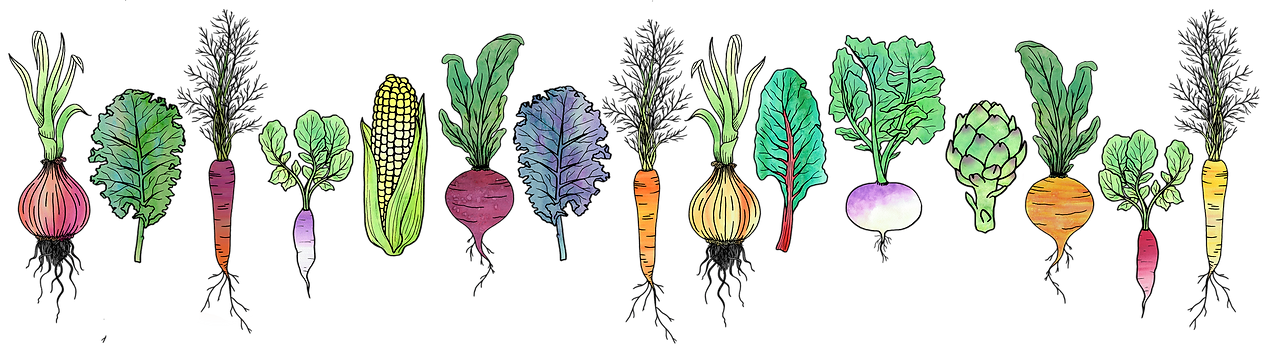 Watercolour Vegetable Line Small.png
