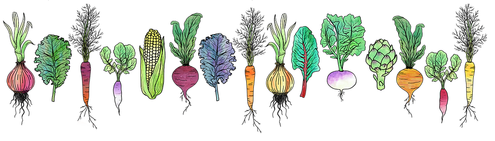Watercolour Vegetable Line Small (update).png