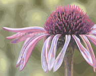 Coneflower- Acrylics on Canvas