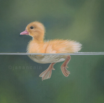 Duckling- Pastels