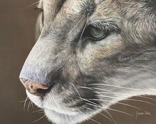 Mountain Lion- Pastels
