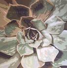 Succulent- Acrylics on Canvas