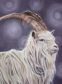 Goat- Pastels