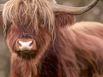Highland Cow- Oils on Canvas