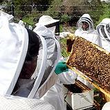 BeeStill.jpg