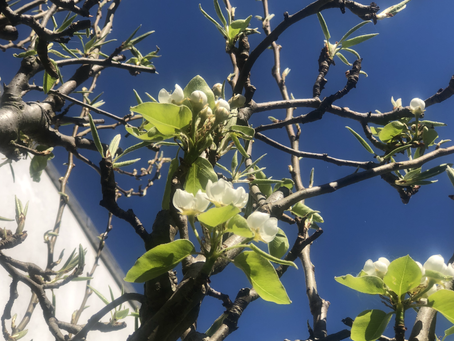 Spring in art part 8: the day van Gogh comes to Fulham