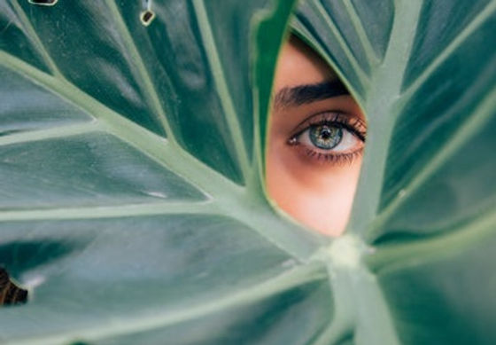 leaf and eye.jpg